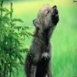 Avatar de cachorrodemente