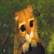Avatar de gato_con_botas