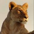Avatar de leona_roja