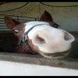 Avatar de caballolocow
