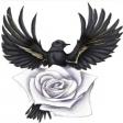 Avatar de black_nightingale