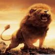 Avatar de lionguy444