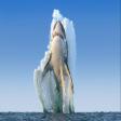 Avatar de tiburon9393