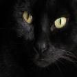 Avatar de gatitofrito