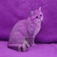 Avatar de purplecat